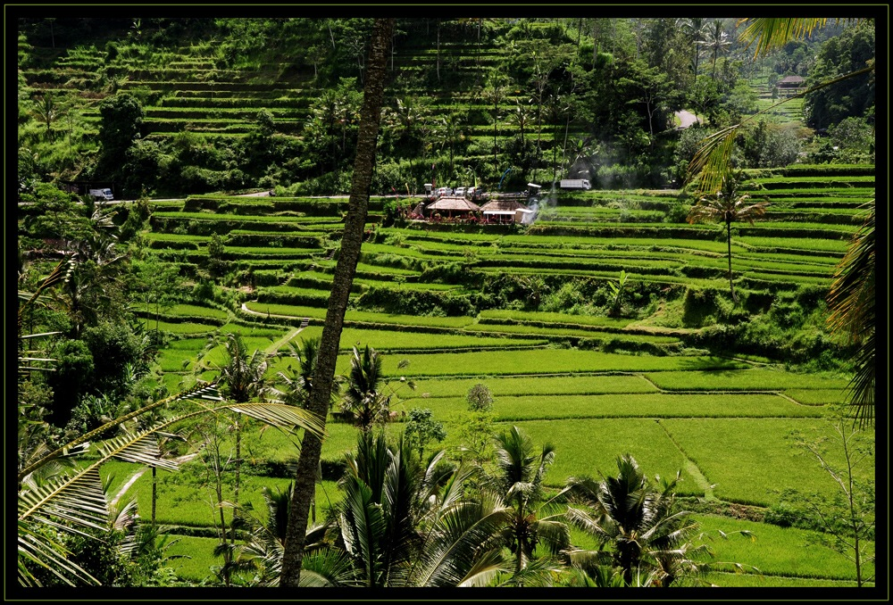 Indonesien – Reisterrassen 2