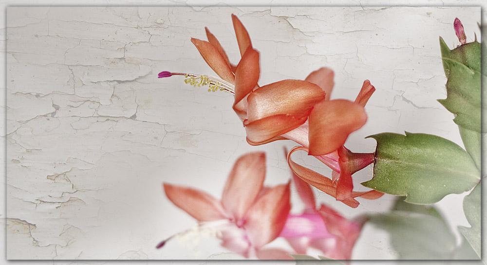 Indoor Frühlingsblümchen
