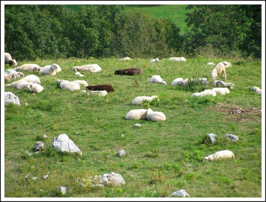 Indovina indovinello: quante pecore e quanti sassi?