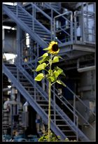industrial sun ...