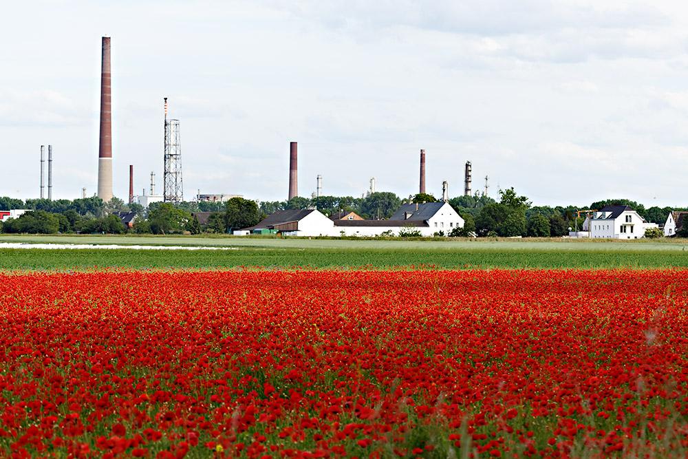 Industrie-Mohn