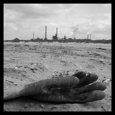 industry kills