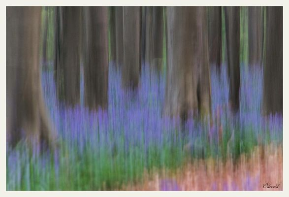 Influences of pictorialism in the Hallerbos.