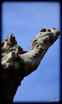 Ingwer-Baum