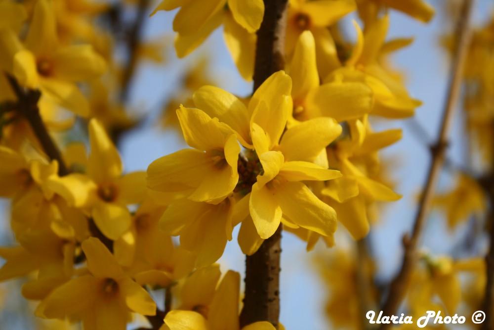 Inizia la primavera....
