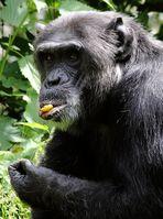 Inklusive Schimpansen Geschichterln