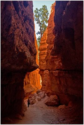 Inmitten der Hoodoos im Bryce Canyon National Park...