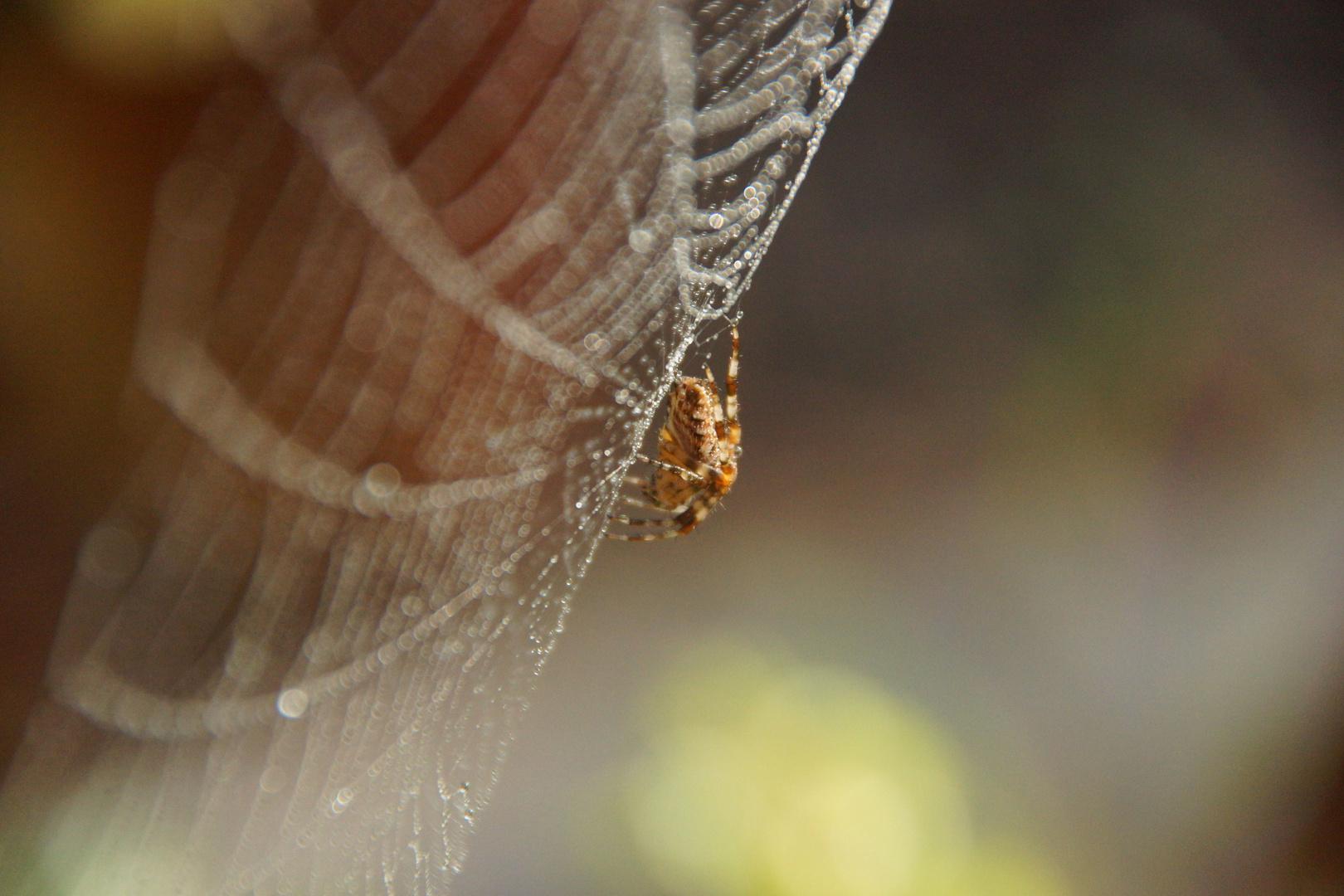 Inmitten des Netzes...