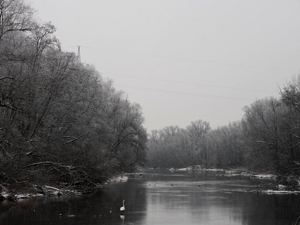 Innauen - Winteridylle reload mit Schwan