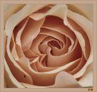 Innenansicht einer Rose