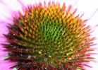 Innenleben einer Blüte