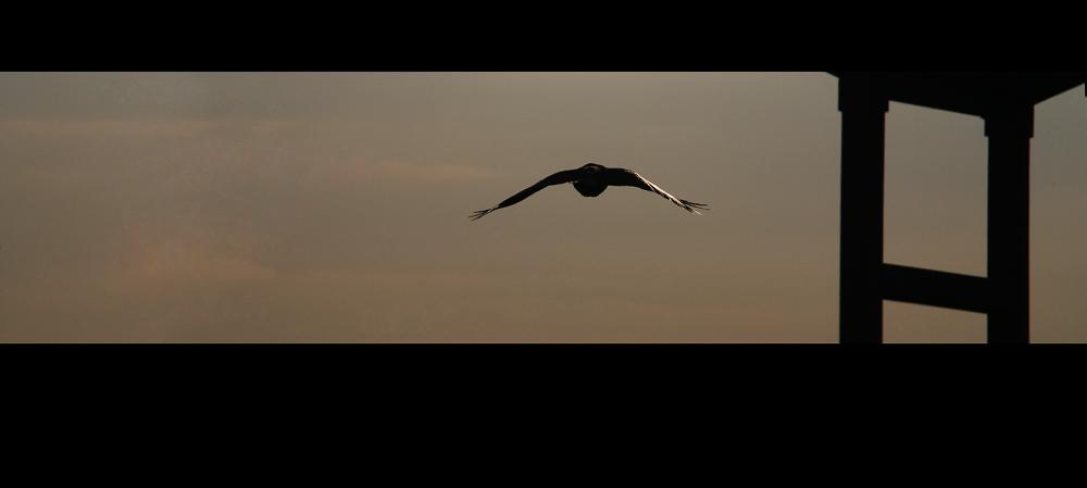 innovative flughafenknipserei #3 - ein echter vogel