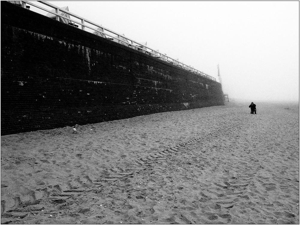 innovative Möwenmakrofotografie im Nebel :-)