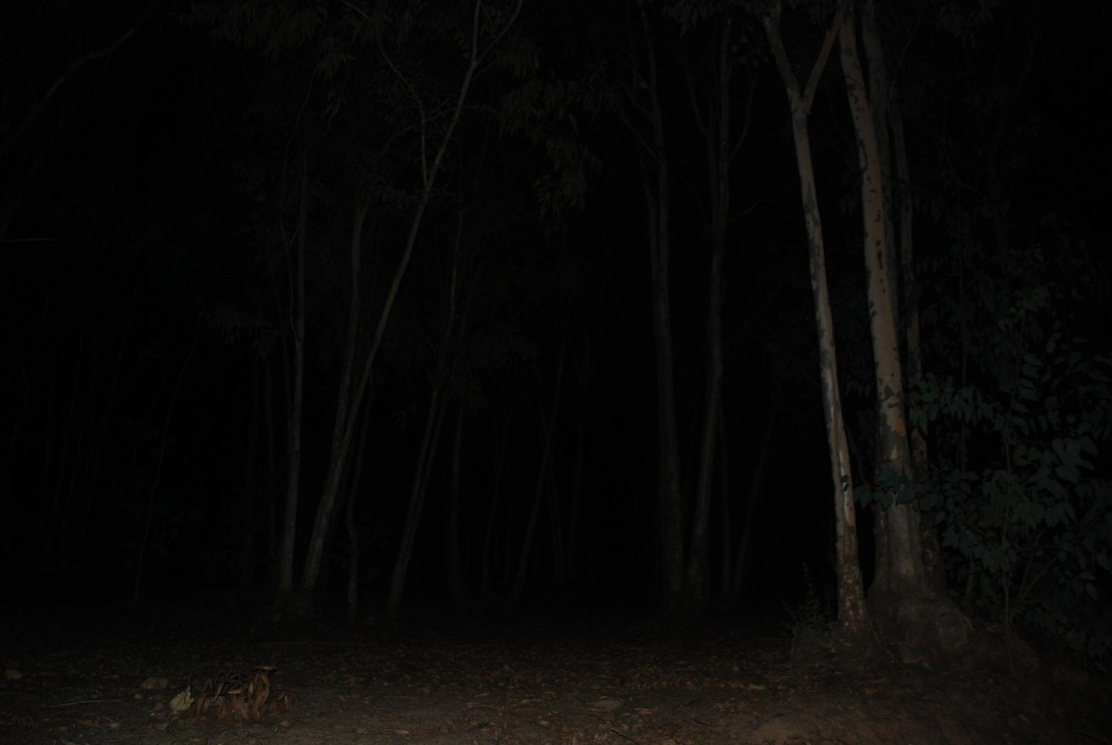 inquietudine oltre gli alberi...
