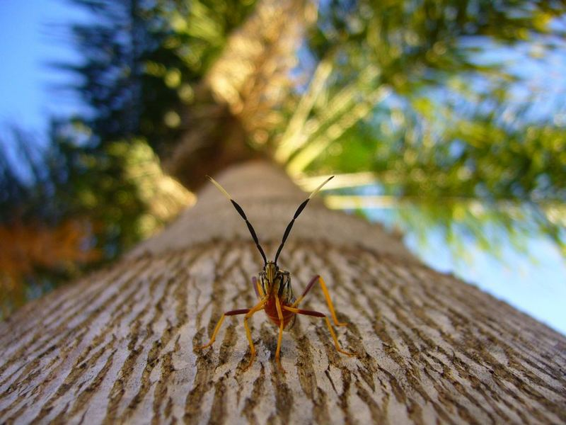 Insect in the Palmtree