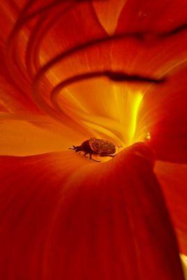 insecte dans la fournaise!