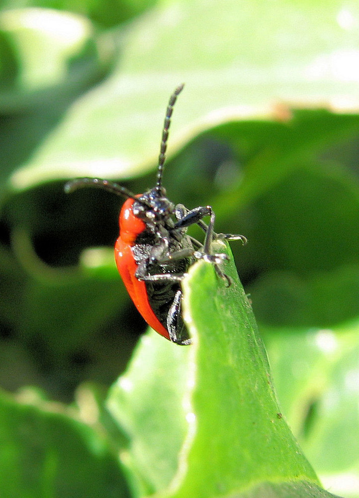 insecte du jardin