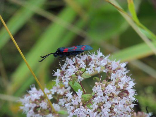 insecte du vercors 2
