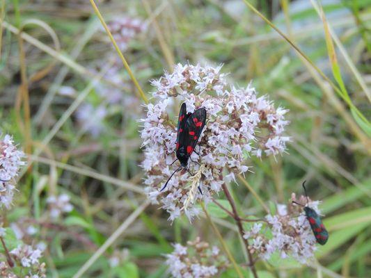 insecte du vercors