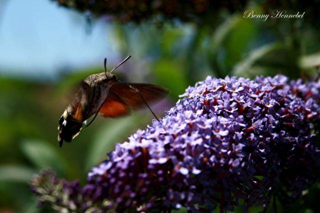 Insecte et Violet