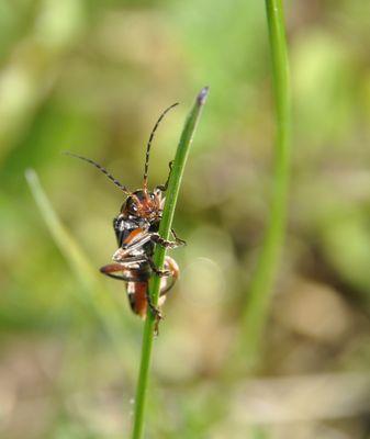 insecte macro