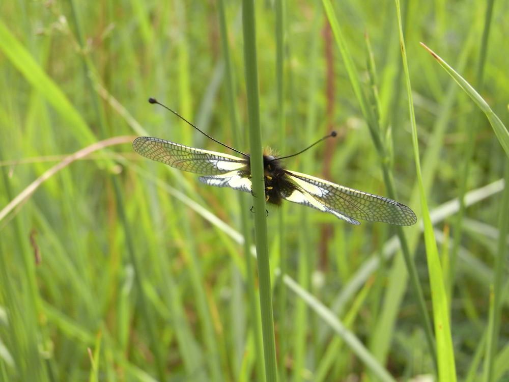 insecte sur brin d herbe