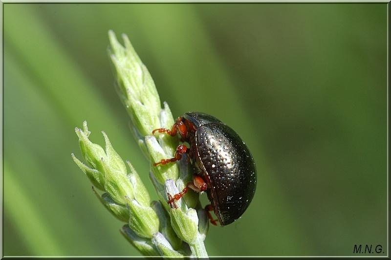 Insecte sur lavande !