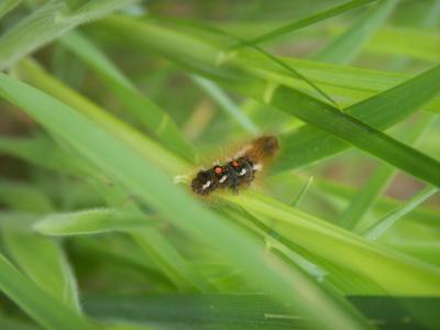 insecte X V87