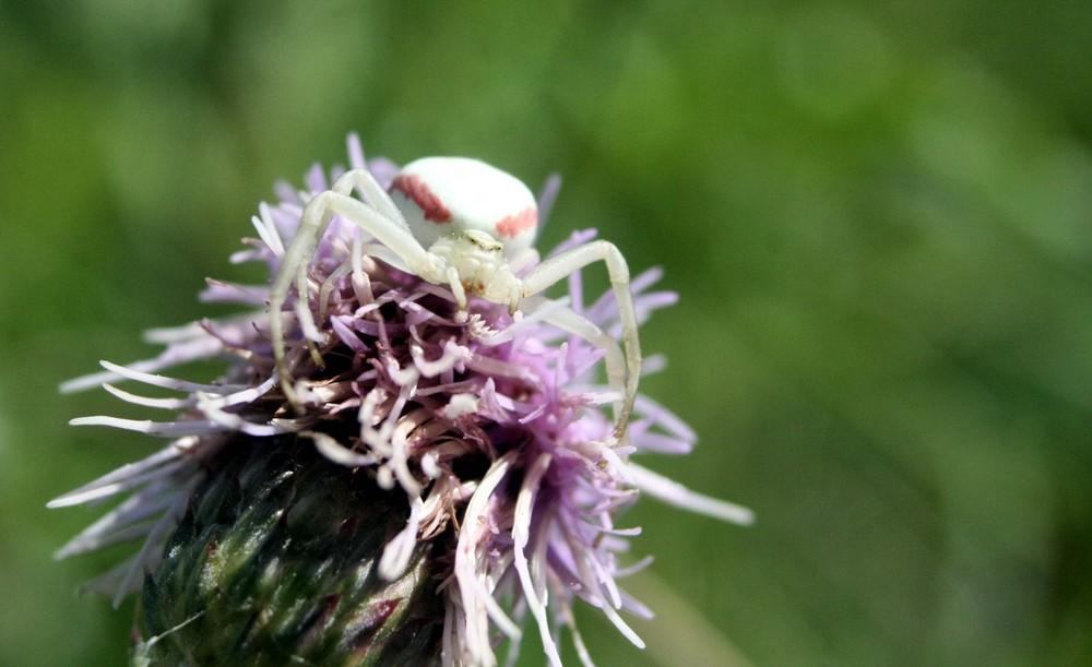 insectes....je vous ai à l'oeil !!!!!