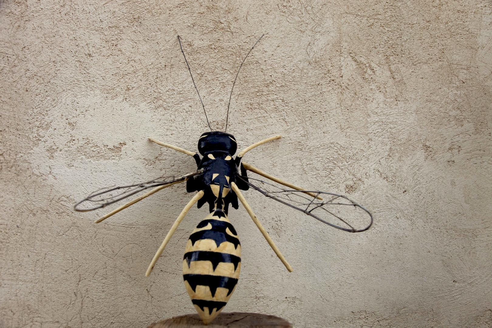 Insecto - avsipa