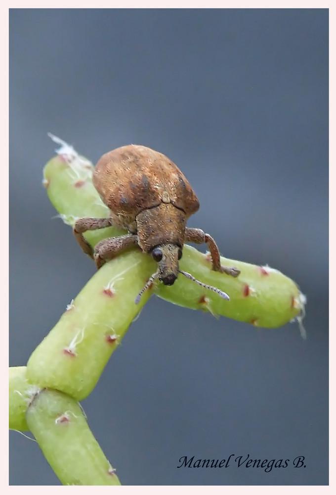 Insecto despues de la lluvia.