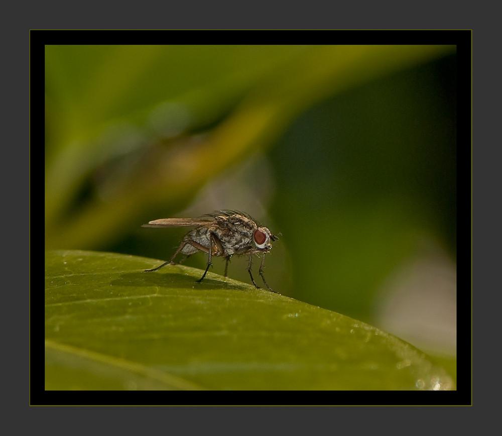 Insecto sobre Hoja 2