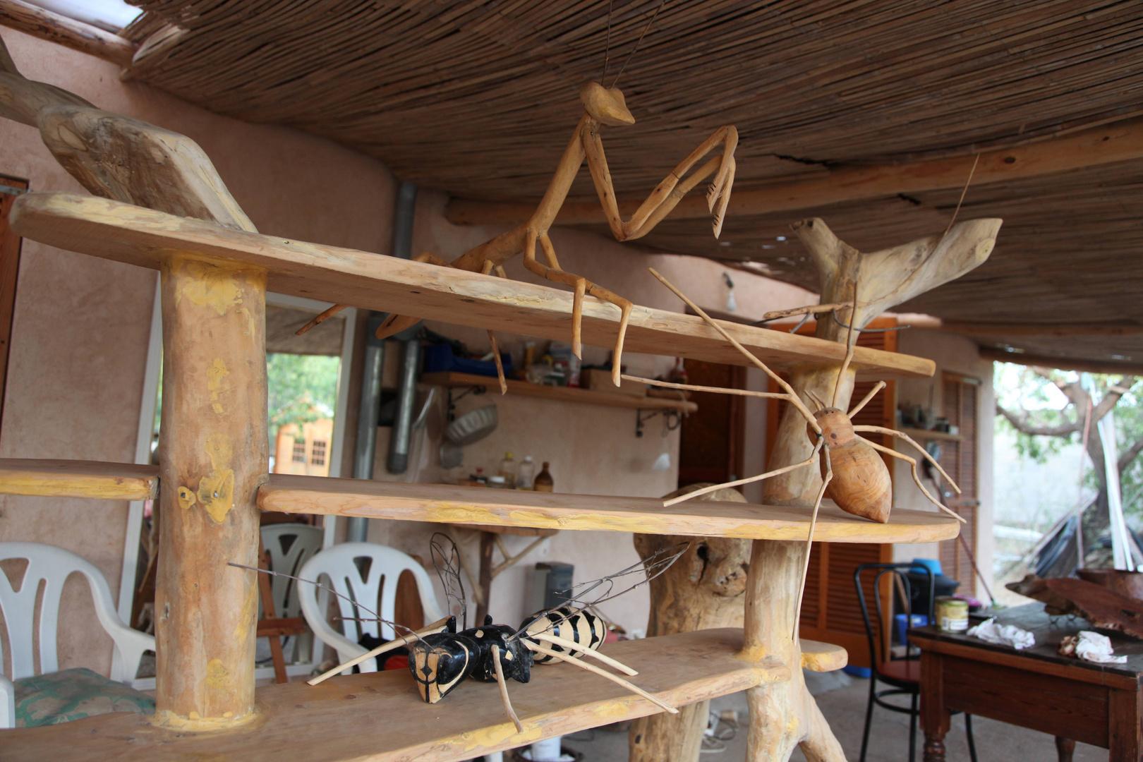 Insectos en estante