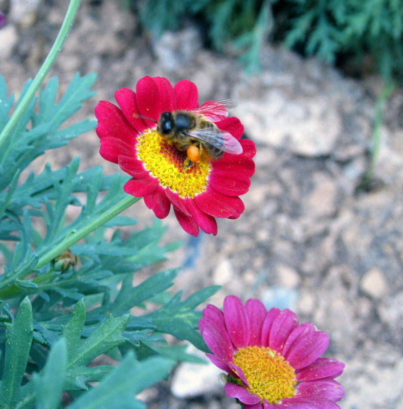 Insectos en la naturaleza 2