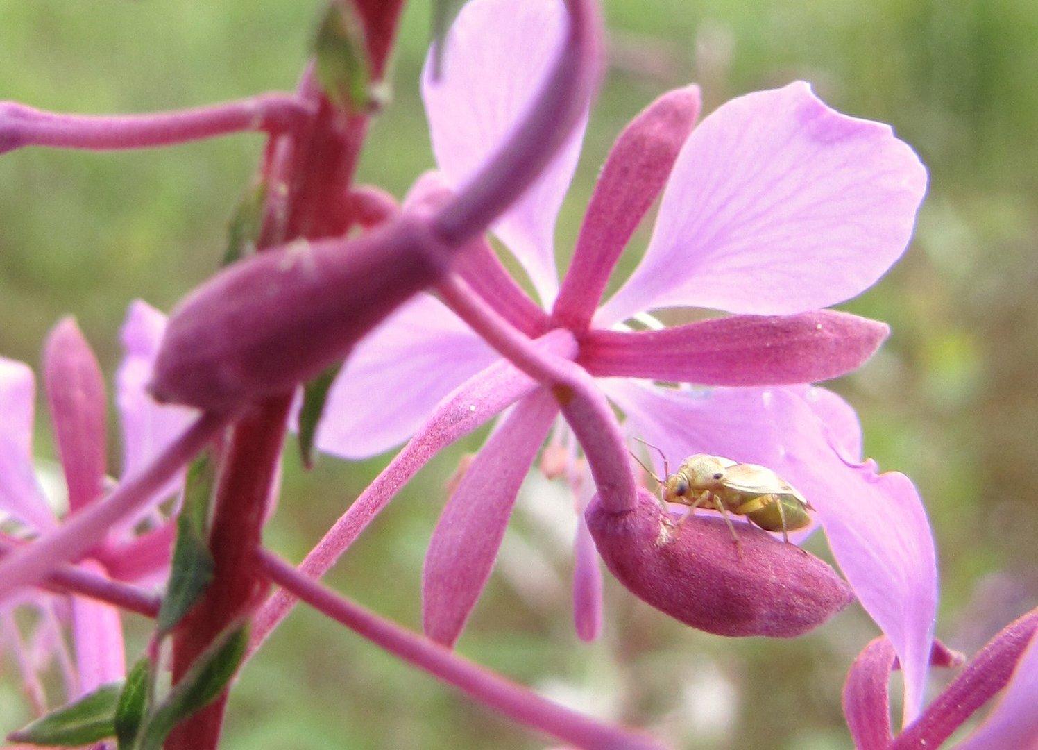 Insekt 01