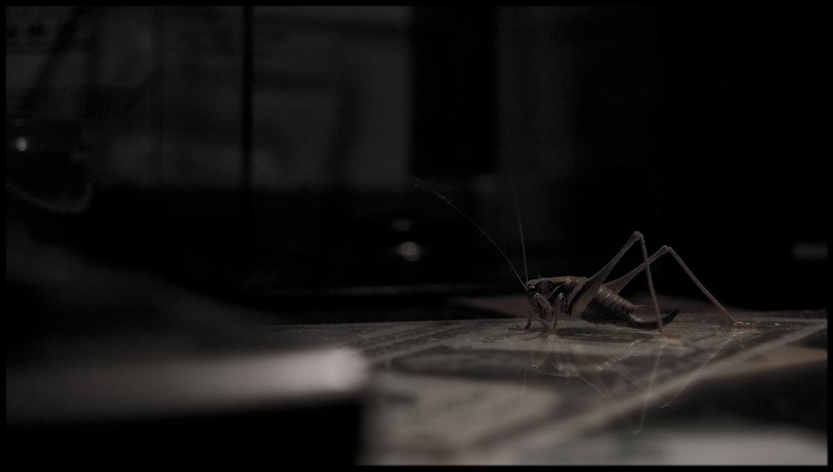 Insekt am Arbeitsplatz