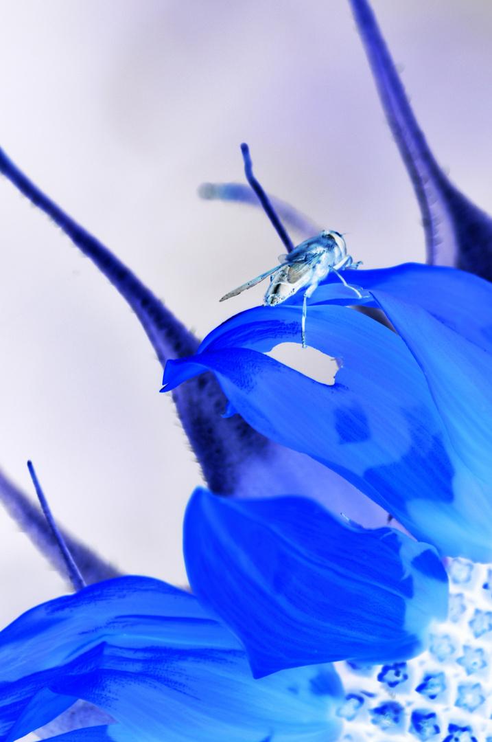 Insekt auf der Sonnenblume