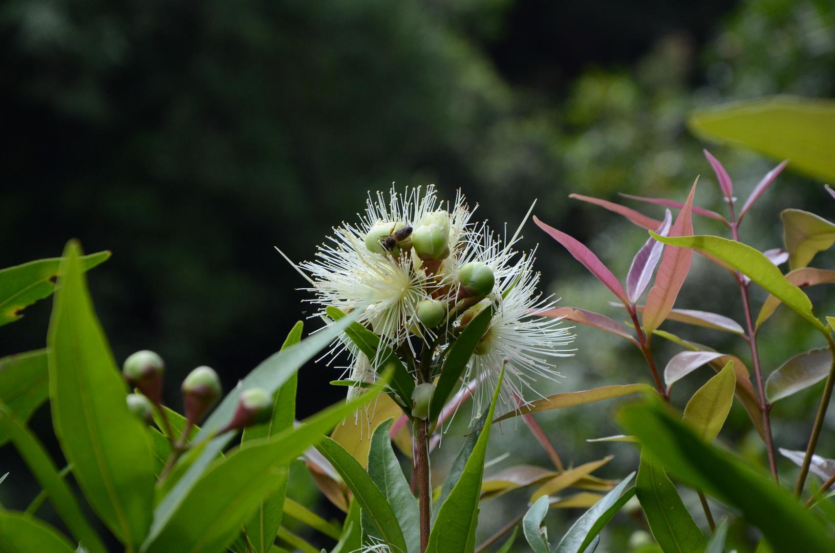 Insekt auf unbekanntem Blütenstand , nett anzusehen .