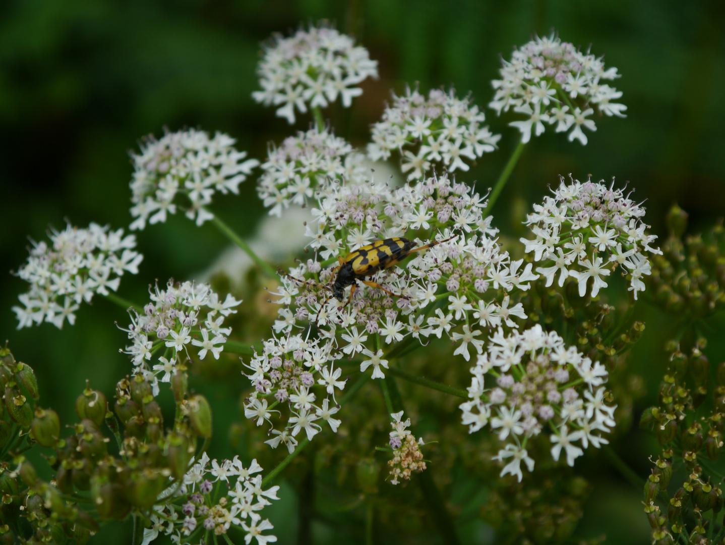 Insekt bei der Arbeit