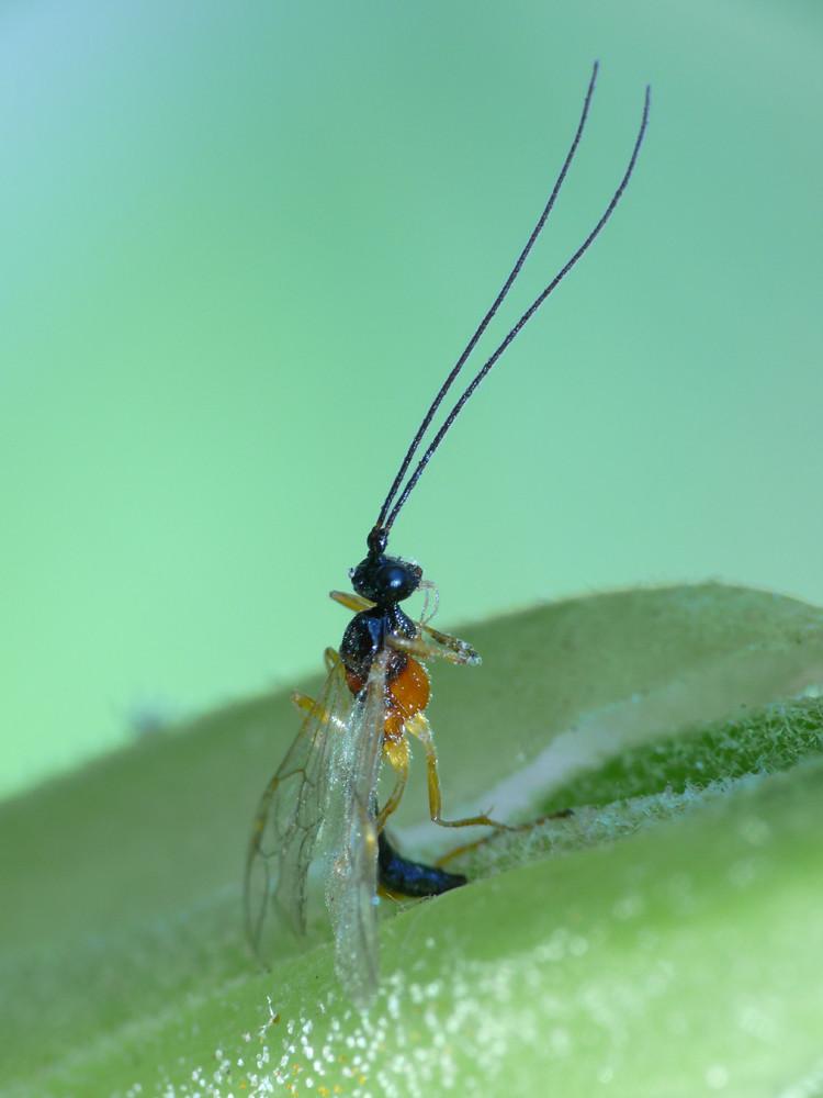Insekt bei Joga-Übung