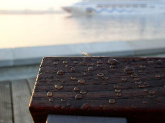 Insekt beim Sonnenbad