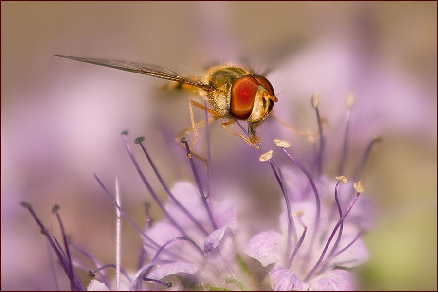 Insekt des Jahres 2004 ( Landung )