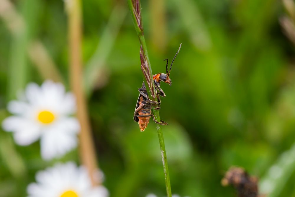 Insekt I