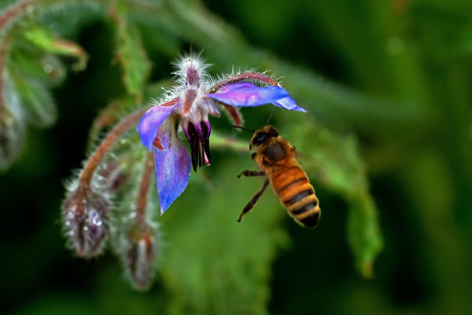 Insekt im Anflug