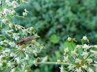 Insekt im Grünen
