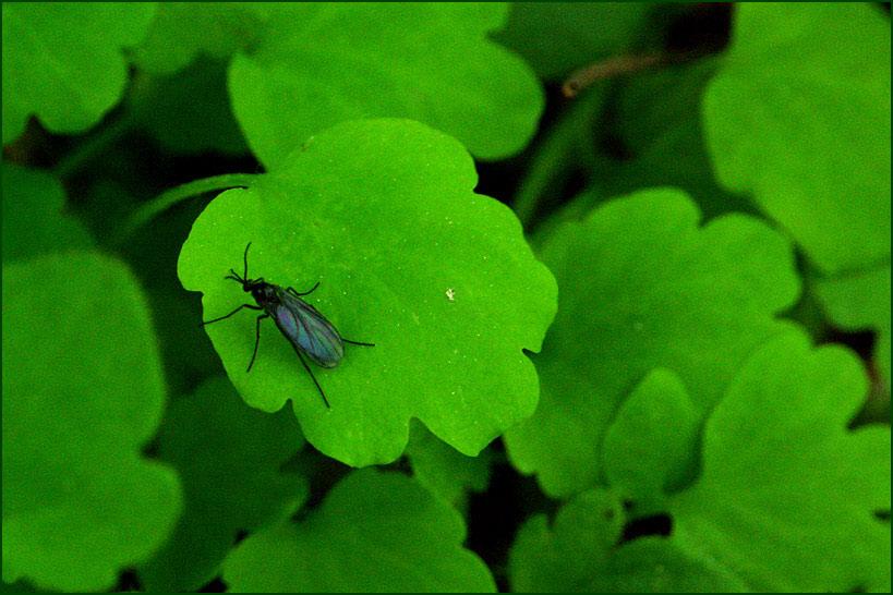 Insekt im Grünwald (AL)
