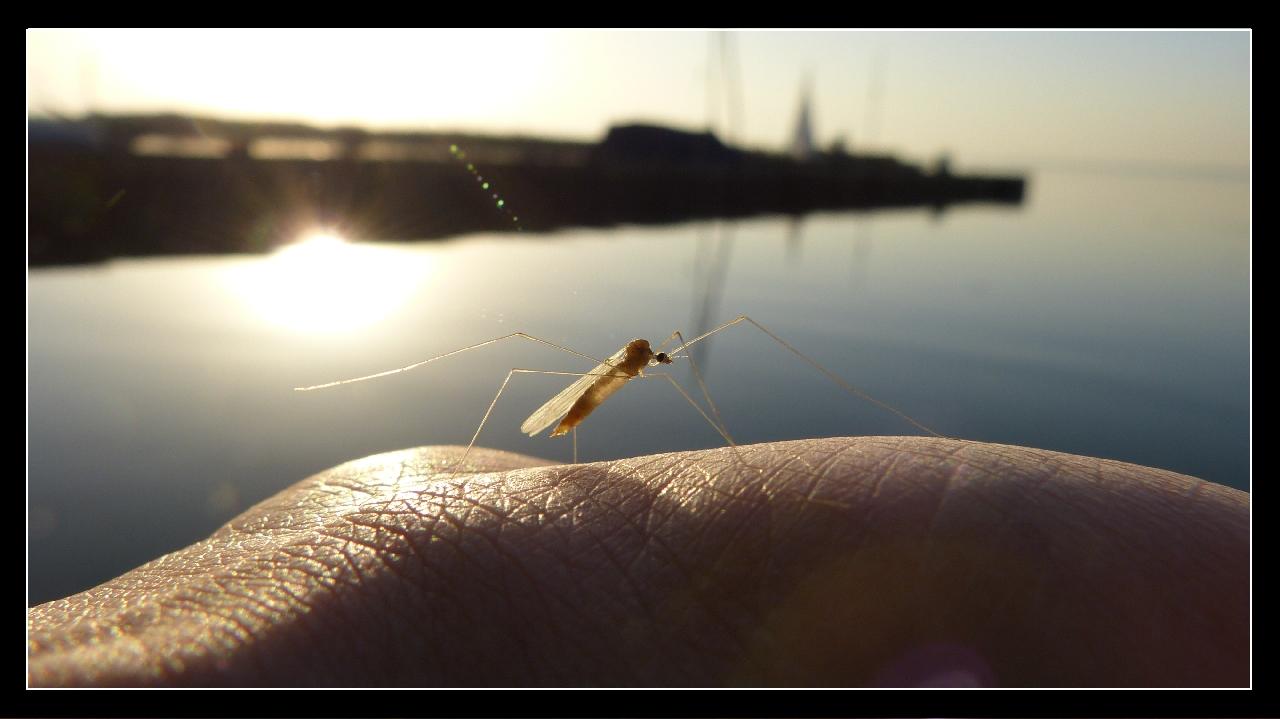 Insekt im letzten Sonnenstrahl