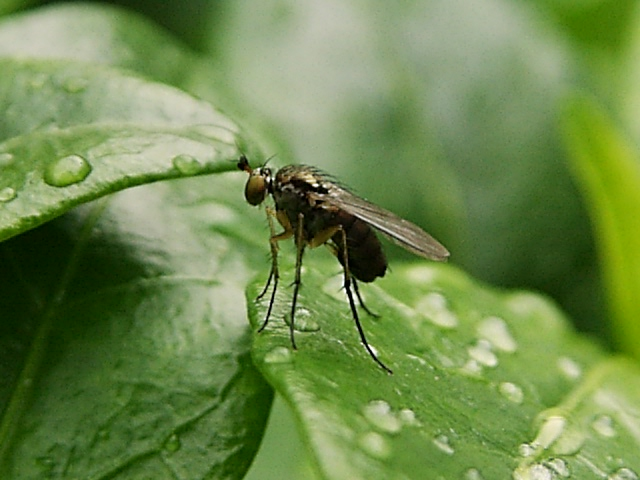 Insekt im Regen