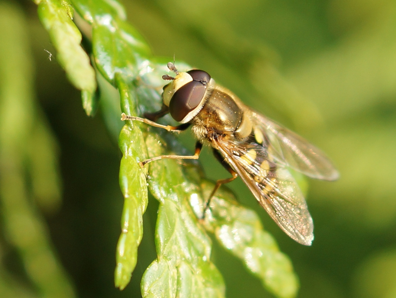 insekt in der hecke foto bild tiere wildlife insekten bilder auf fotocommunity. Black Bedroom Furniture Sets. Home Design Ideas