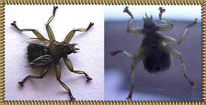 Insekt oder Alien ???